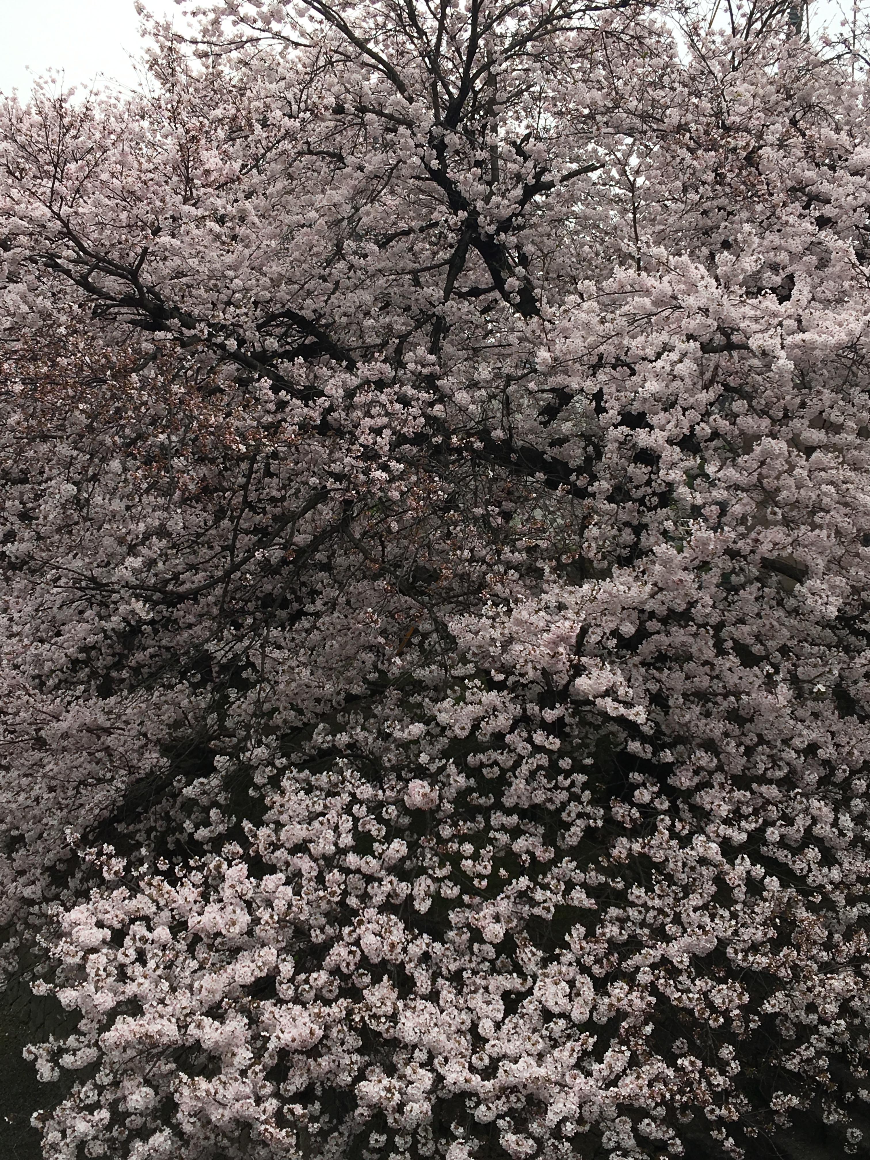 http://www.okadakomuten.com/blog1_img/2016-04-03%2015.14.58.jpg